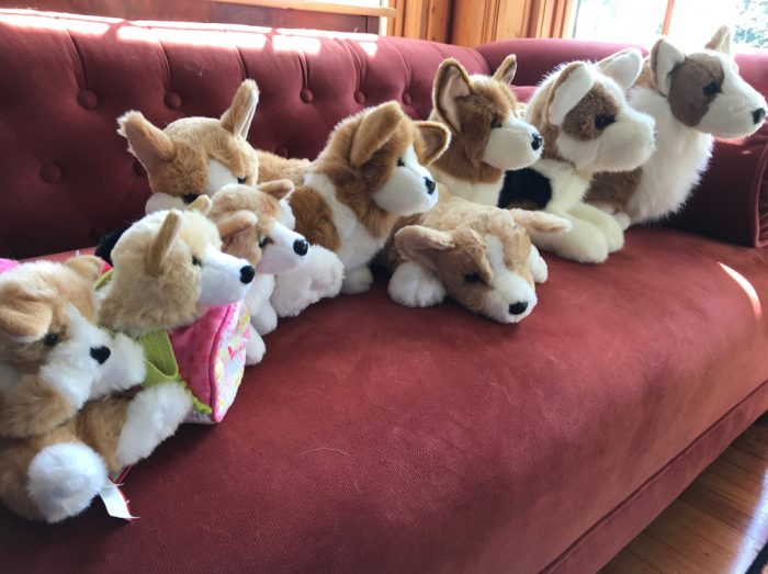 Collection of Stuffed Corgis